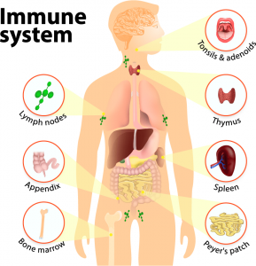 Immune Health 101: Supplements
