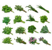 Whole Herbs in Bulk